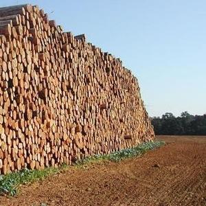 Продам лес кругляк (хвойных и других пород)